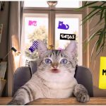 Emissora escala gato para apresentar jornal. Entenda!