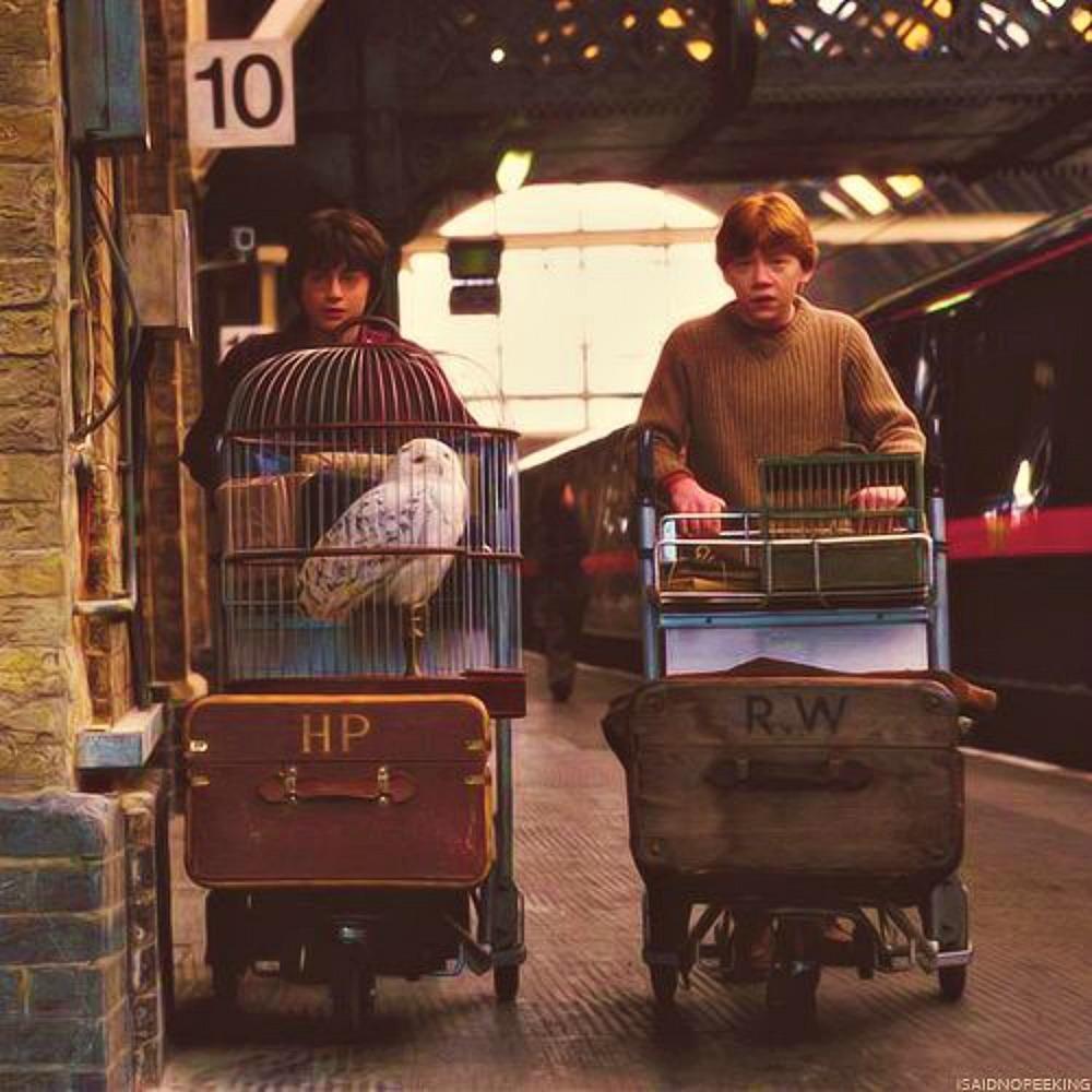Brasileiros fãs de Harry Potter vão viajar a Hogwarts durante live